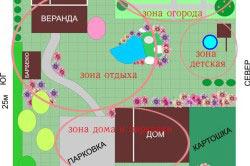 Планируем посадки в огороде учитывая совместимость растений