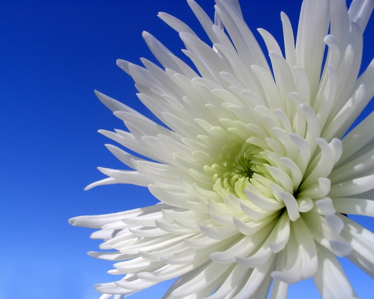Güzel iddiasız bir kapalı çiçek nasıl seçilir