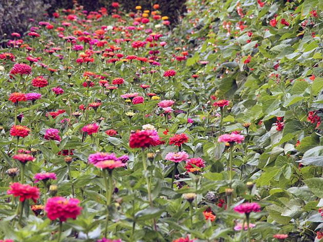 разница цветы в грунт в апреле фотография